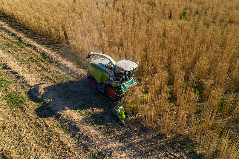 3. Miscanthus harvest 2 sml.jpg