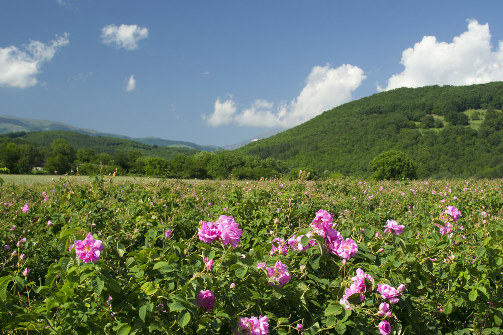 Bulgaria's Rose Valley