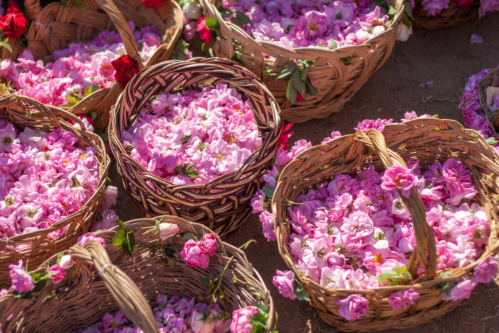 Bulgaria is a leading producer of rose oil, popularly used in cosmetics & fine fragrances.