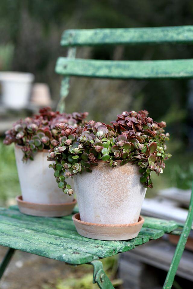 Bergs_julie_rosa_samling_plante_krukker_stol.jpeg
