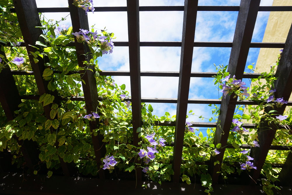 Trellis with purple flowers and clear blue sky