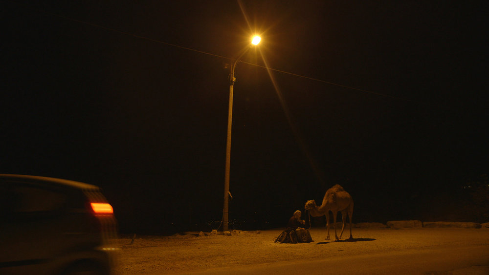 Shoham Dgani and her camel at the illegal outpost of ALEI SHUR.jpg