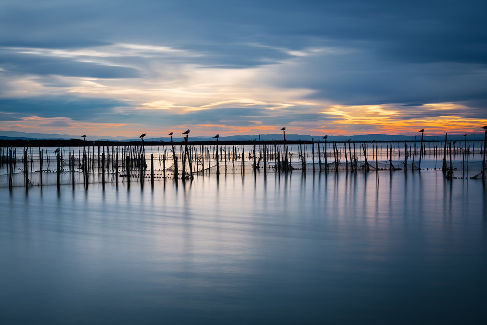 Silhouette of birds standing on poles at dusk in the Albufera in Valencia