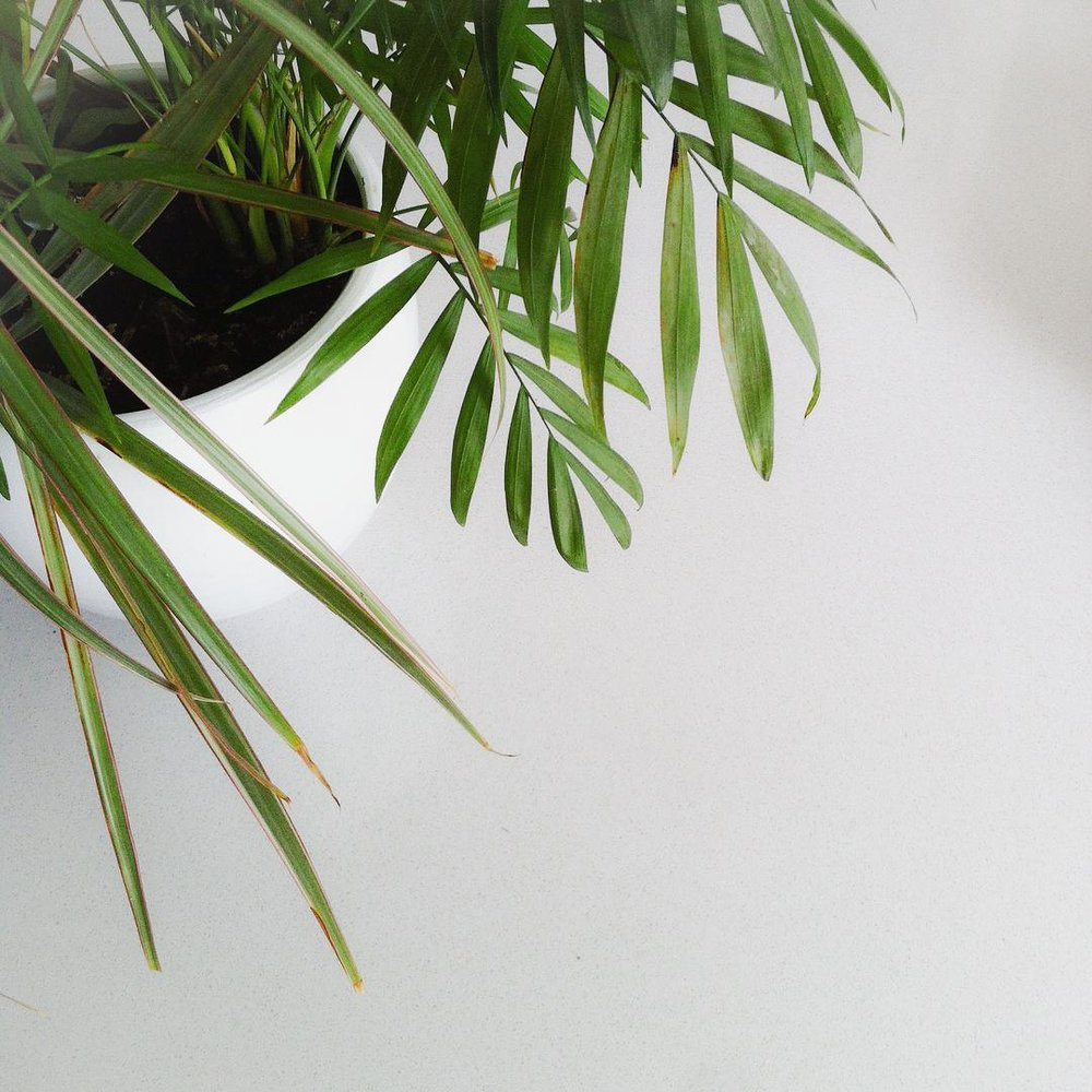 IDEABAR STUDIO - MINIMAL WHITE NATURE