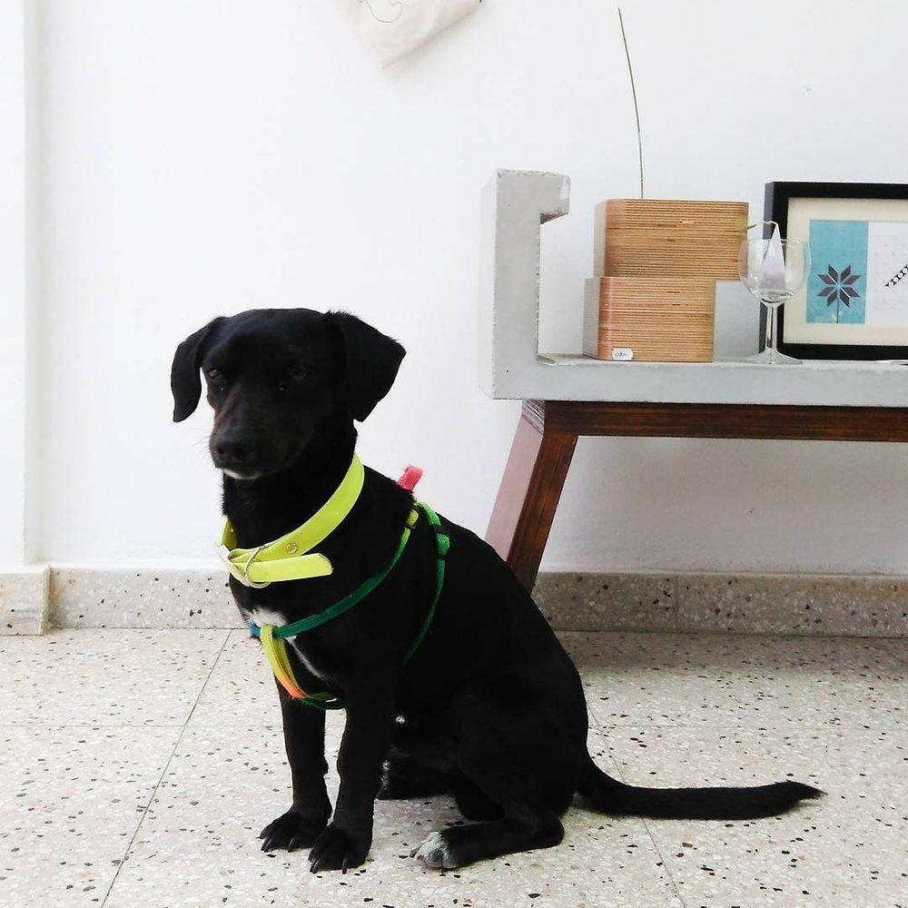 BLU - IDEABAR STUDIO PETS