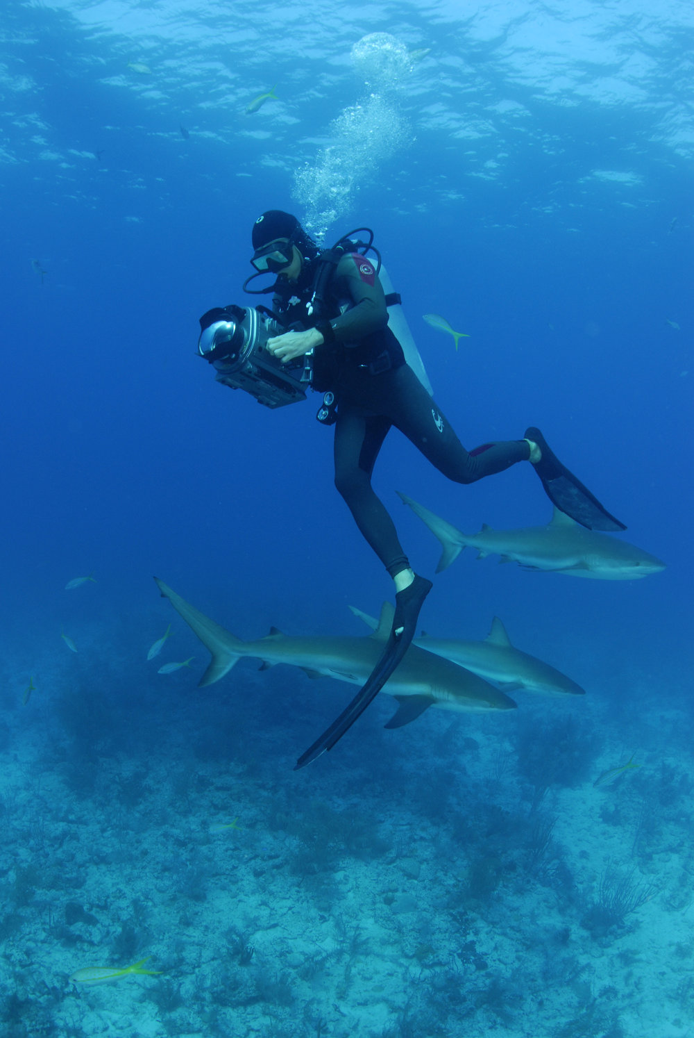 filming-caribbean-reef-sharks-bahamas.jpg