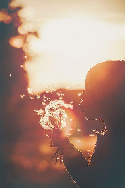 vento dandelion.jpg