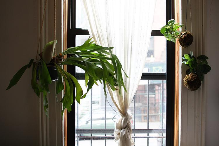 plant swap 3.jpg
