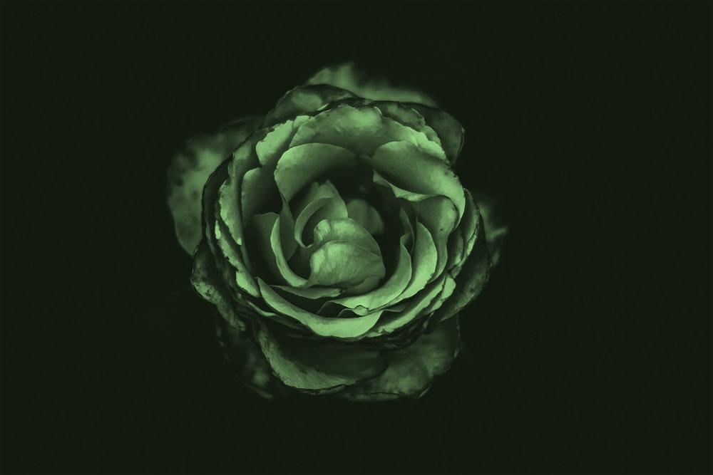 neon rose 4 copy.jpg