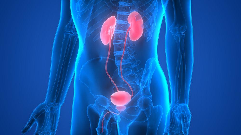 Uro-genital Conditions - Renal Insufficiency, BPH, Overactive Bladder, Yeast Infections, Vaginitis, UTI, Pyelonephritis (Kidney Infection), Urethritis