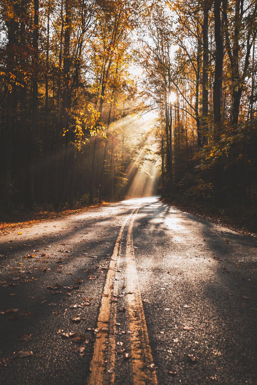 Tennessee Fog Road.jpg