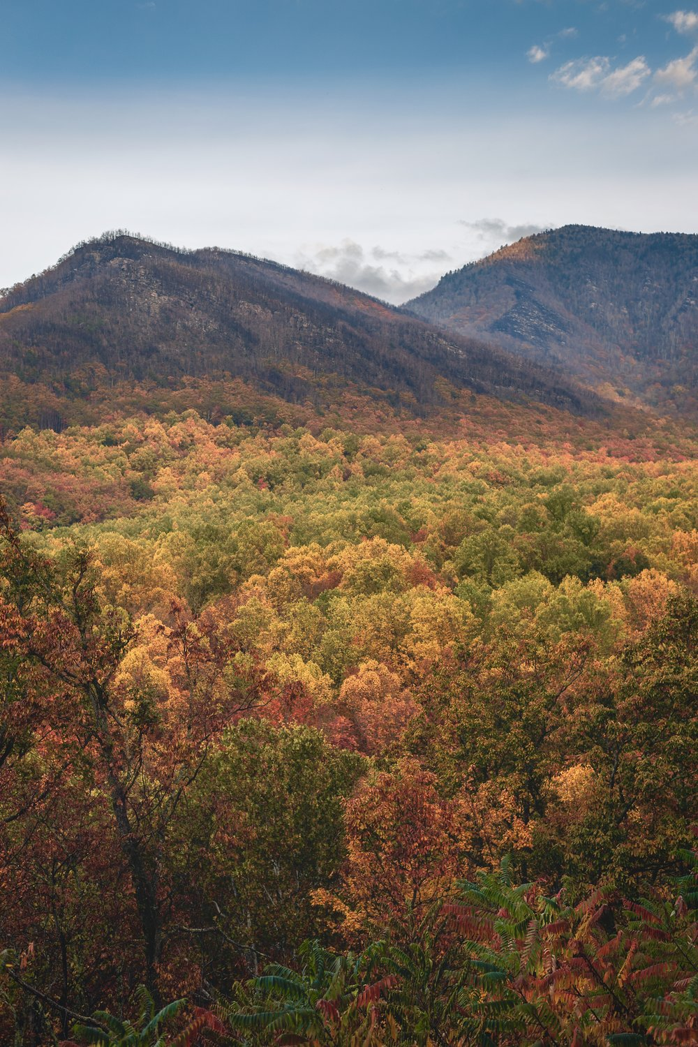 Gatlinburg Colorful Trees.jpg