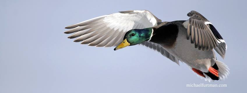 Ducks Unlimited Redding Sportsman's Expo Hunting and Fishing Show