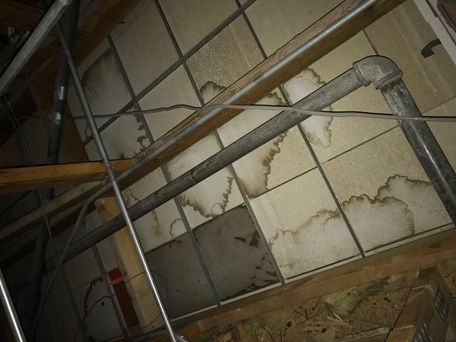 internal attic.jpg