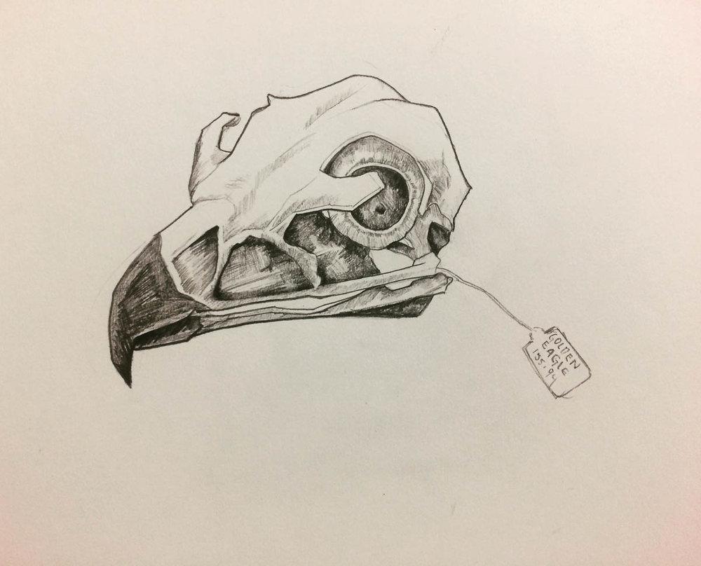 buho. lápiz sobre papel. 35 x 25 cm