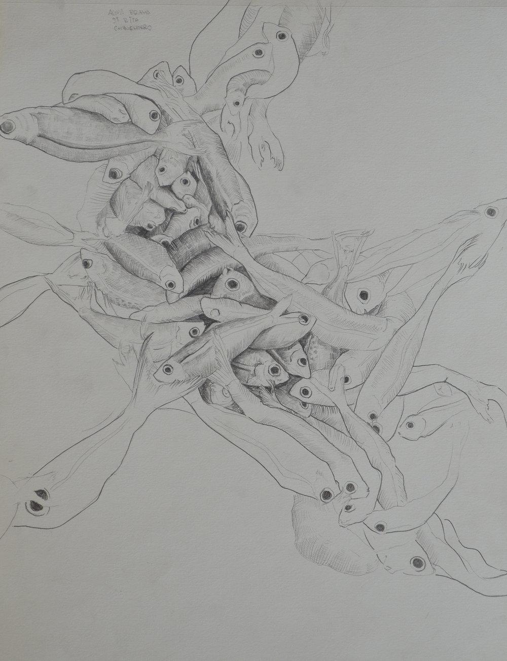 peces 1. lápiz sobre papel. 25 x 35 cm