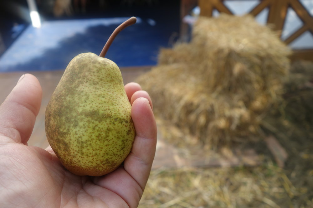 Luscious pears, one of four pear varieties available this weekend