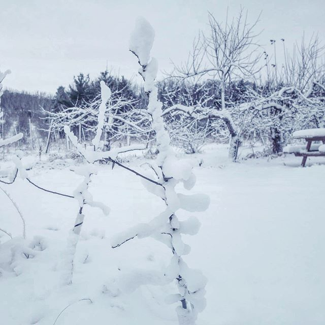 Baby trees in winter!