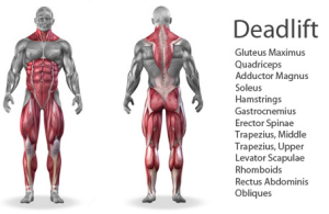 Deadlifts-Exercise-Benefits-Image
