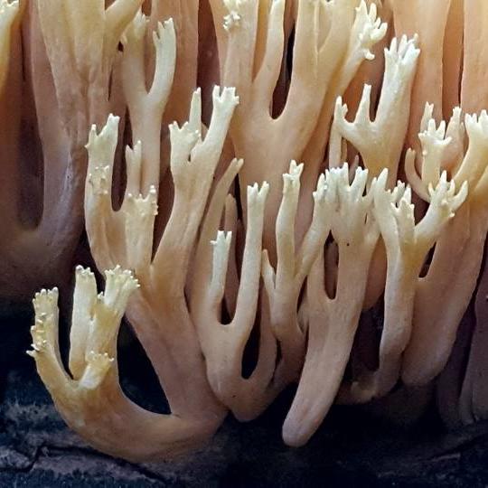 Telluride Mushroom Company