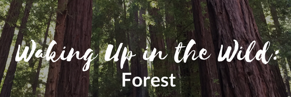 wuw-forest-17.png