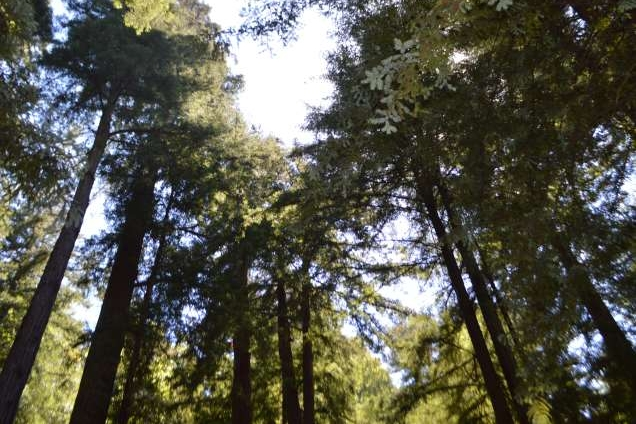 SEEMONTEREY Blog: Forest Bathing: Dropping into a Natural High   by Marianne Rowe