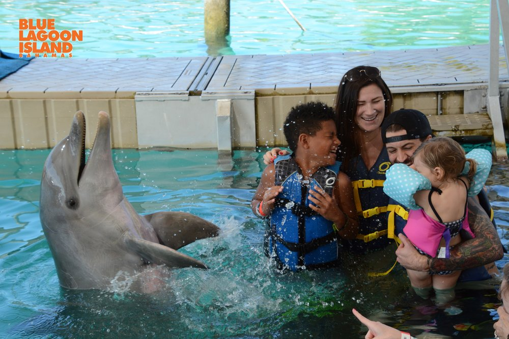 Swim with Dolphins nassau