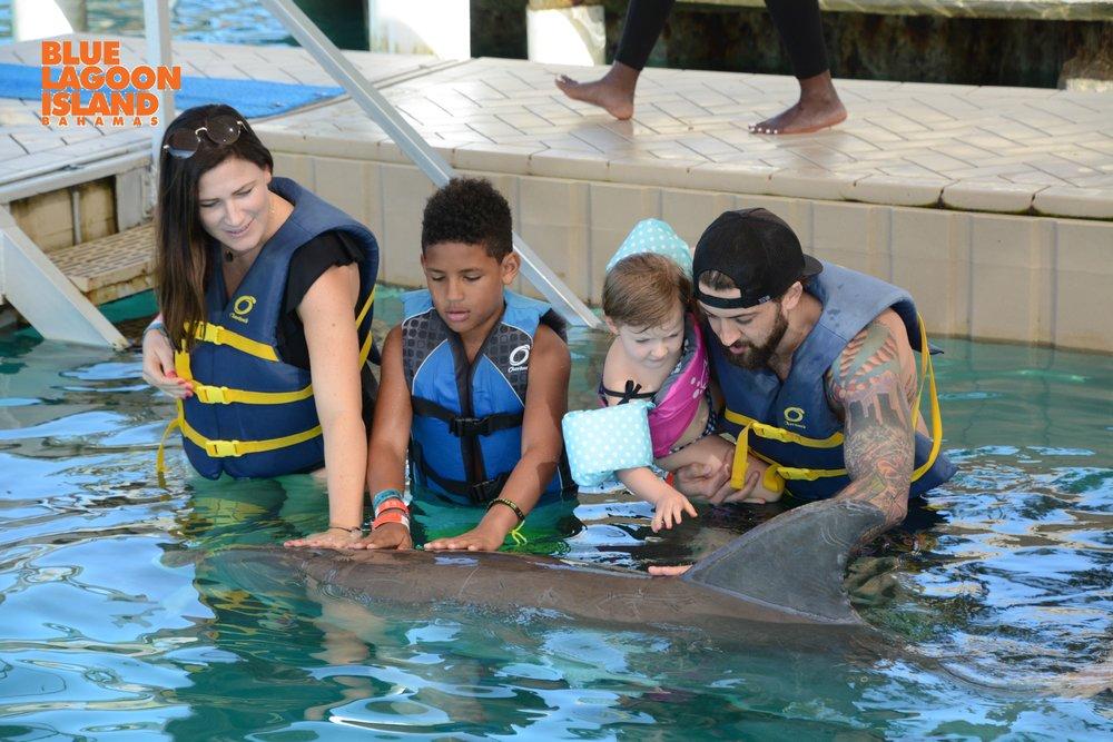 dolphin swim nassau