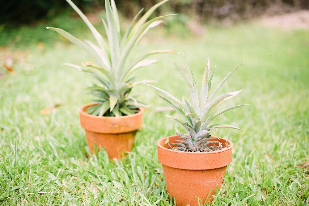 Hawaii Pineapple