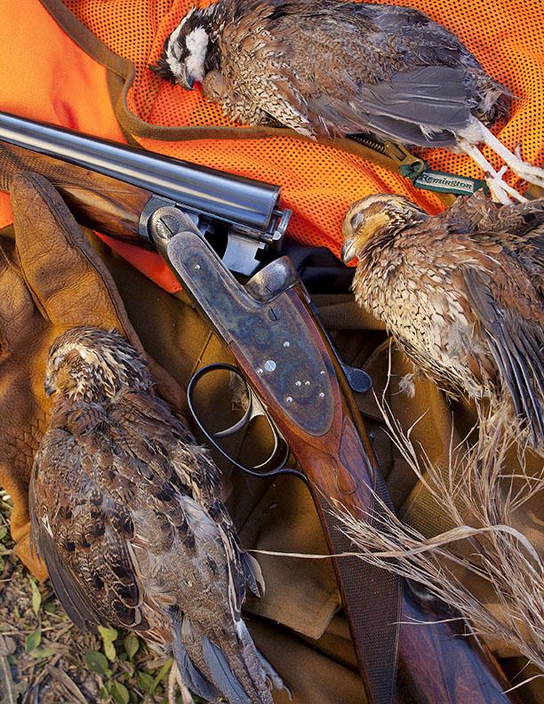 quail_hunt.jpg