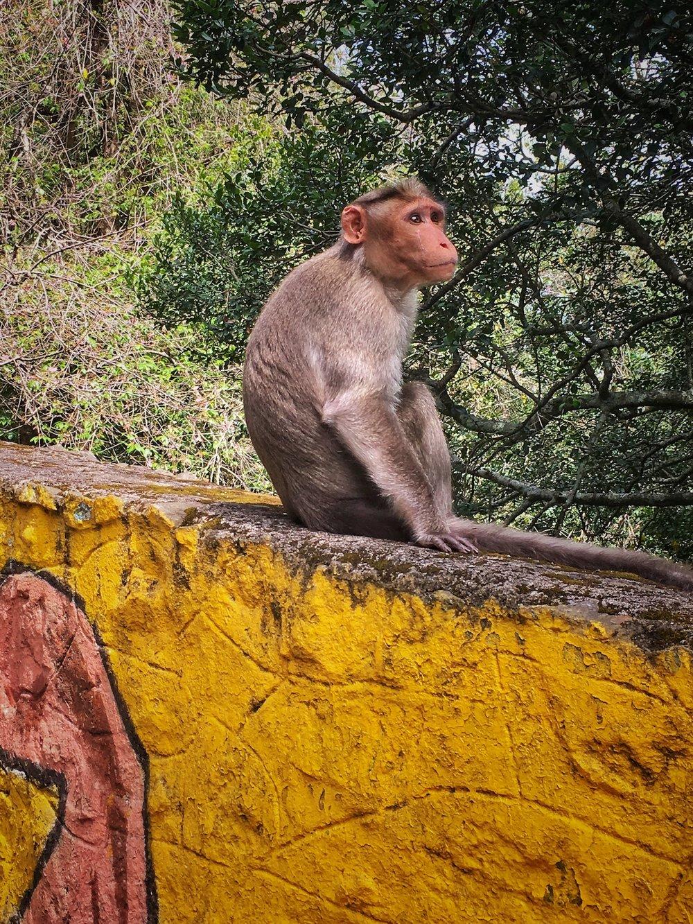 Monkey Business.jpg