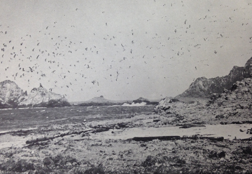 Strange Shores Tales From The Farallon Islands Chad Cannon