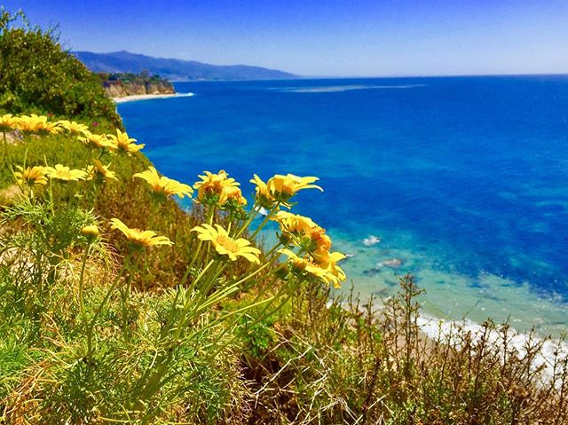 Hope your off-season is filled with sunny skies, May flowers, and crystal waters 🌼💙🐬☀️ #malibu #wanderlust