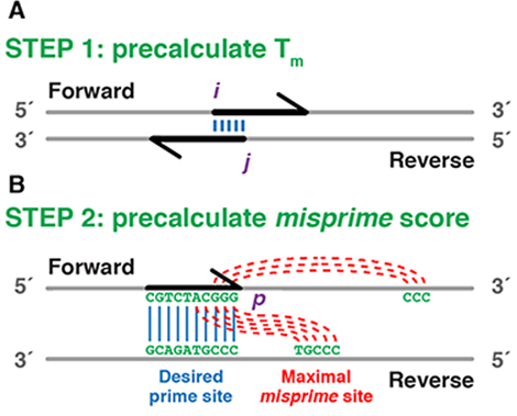 Schematic and runtime of the primerize algorithm -  Schematic of the Primerize algorithm. Tm (STEP 1) and misprime matrices (STEP 2) are pre-calculated for the dynamic programming assembly.