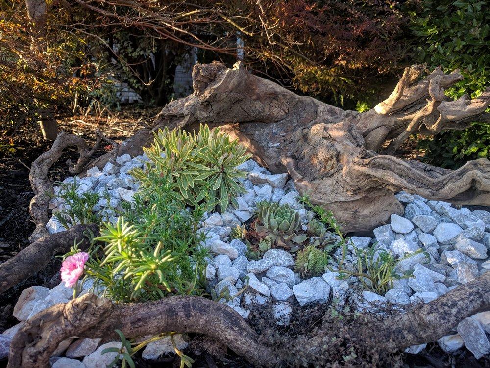 Rock Garden Closeup.jpg
