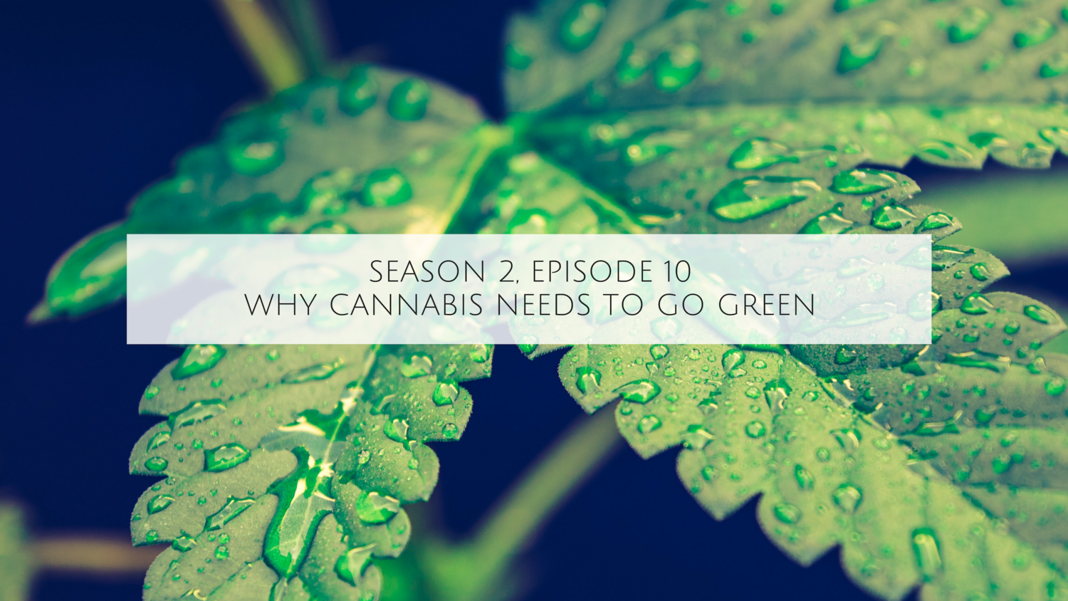 WeedWeek | Listen to the Most Popular Podcasts on OwlTail