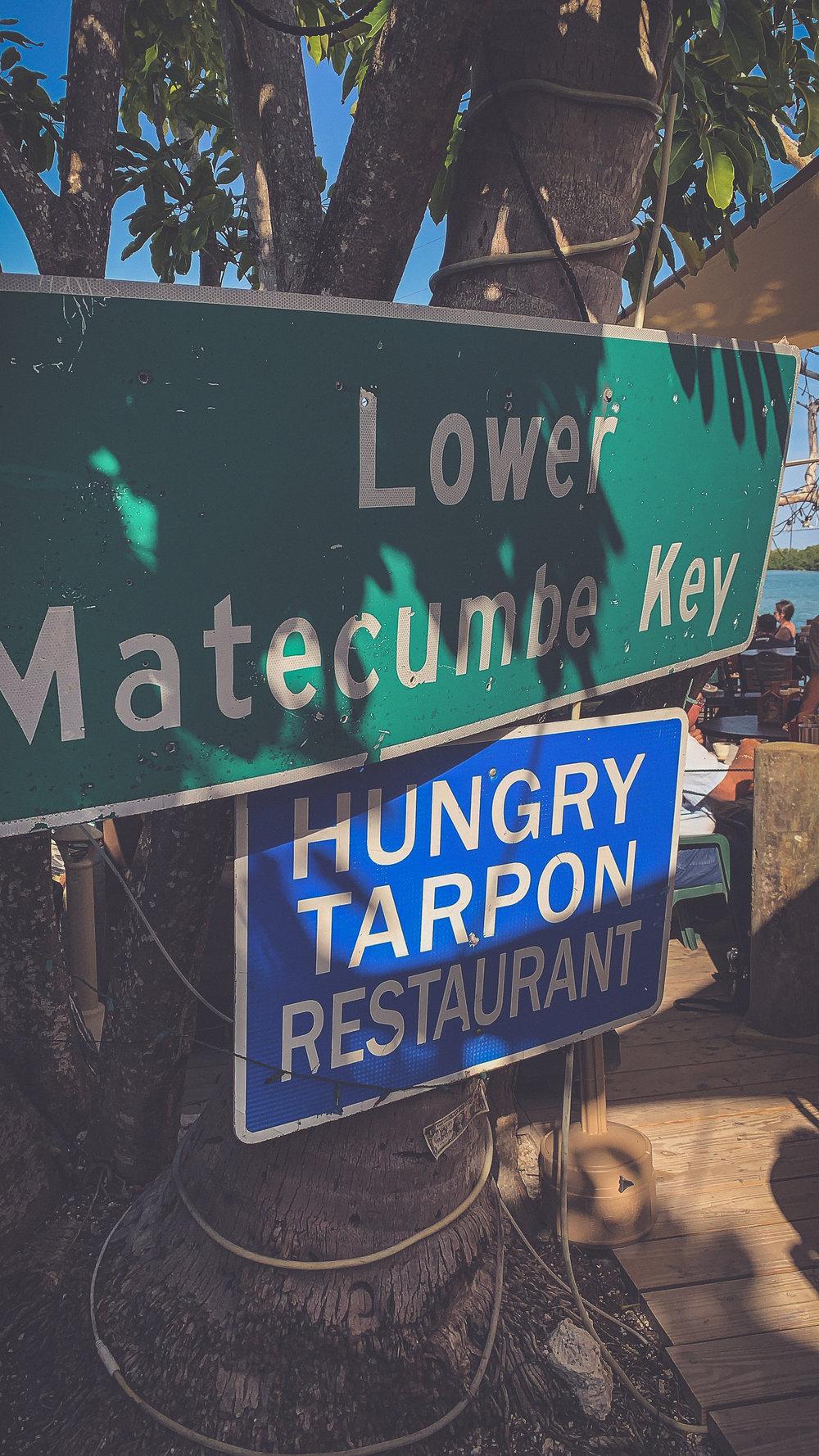 The Hungry Tarpon