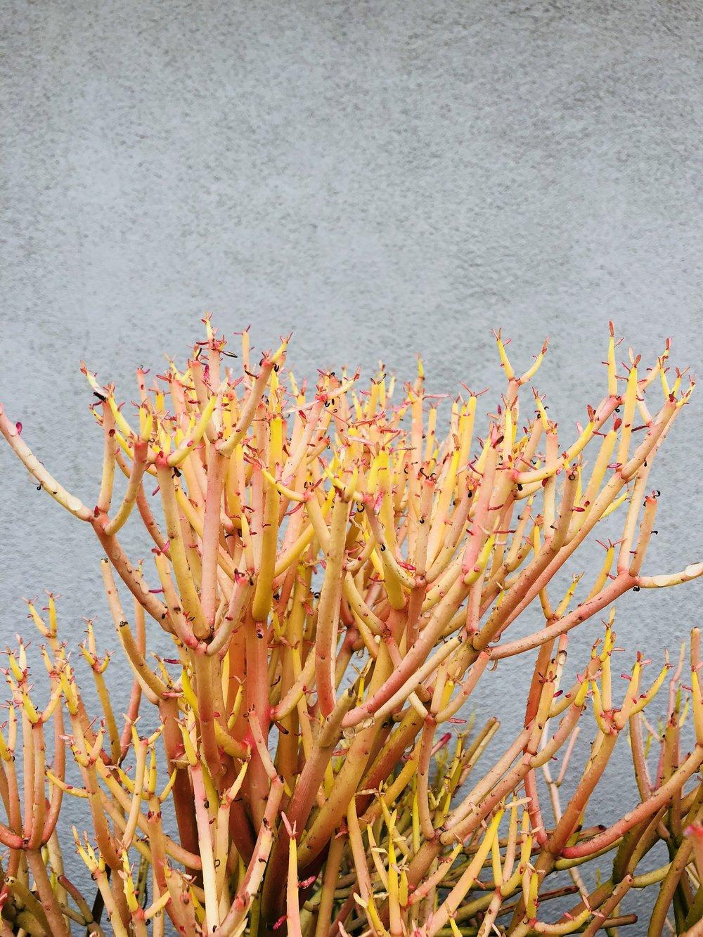 fire plant.jpeg