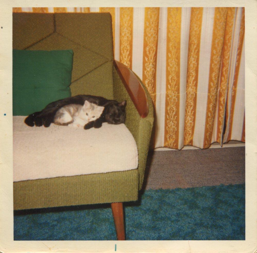 Family cats Beebee and Tortie at 290 Rosebank Road. Photo credit: Susan Hawkins. 1974.