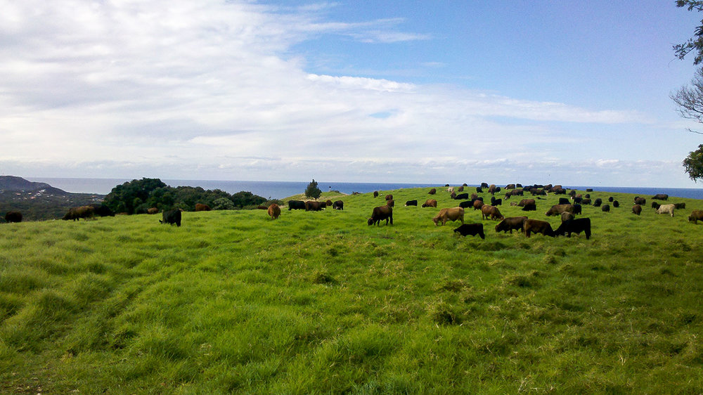 Hayters Hill Farm