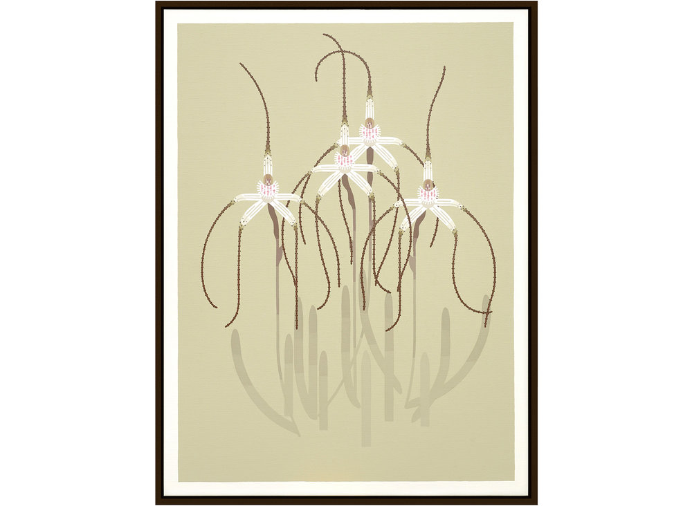 'Caladenia exilis' 105cm x 80cm - acrylics on linnen 2016