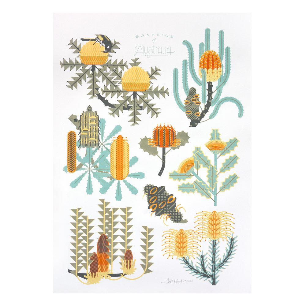 Banksia_print_1500.jpg