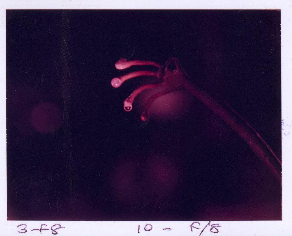 *Glowingfingers.JPG