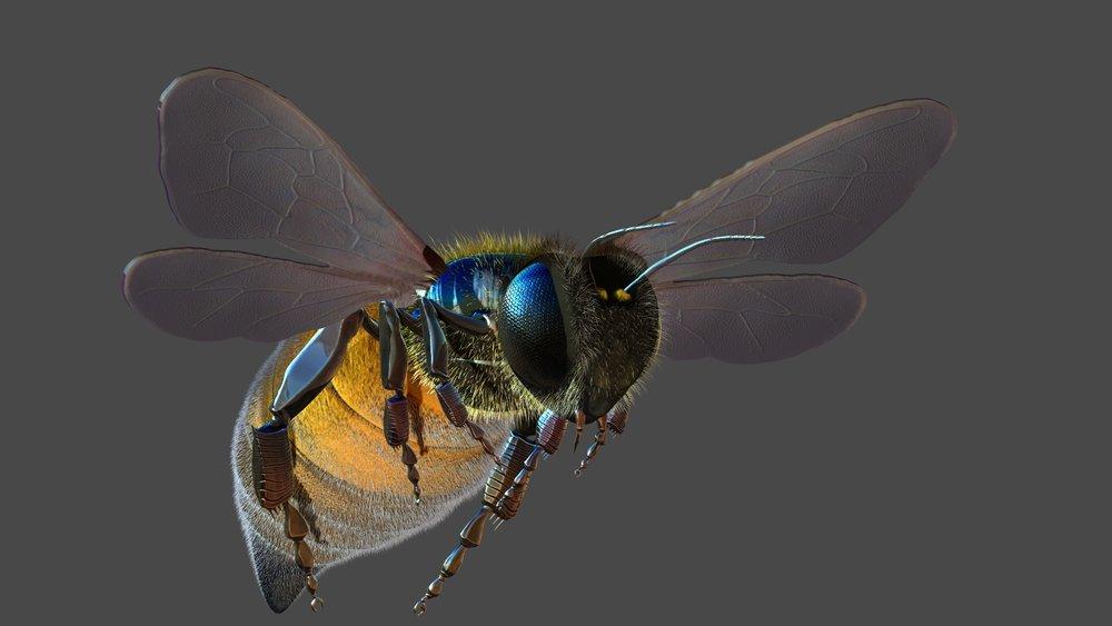 Honeybee3.jpg