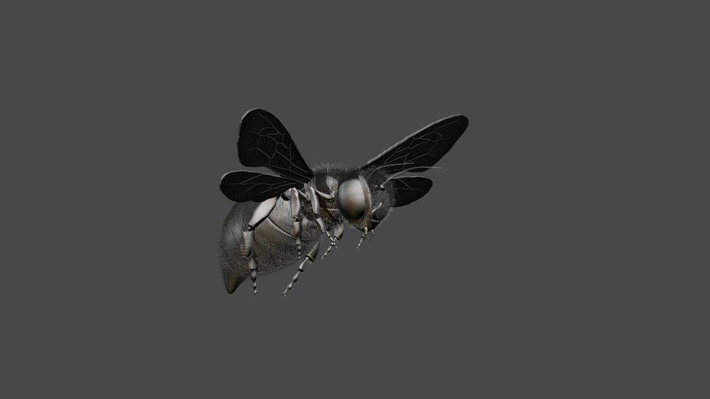 Honeybee6.jpg