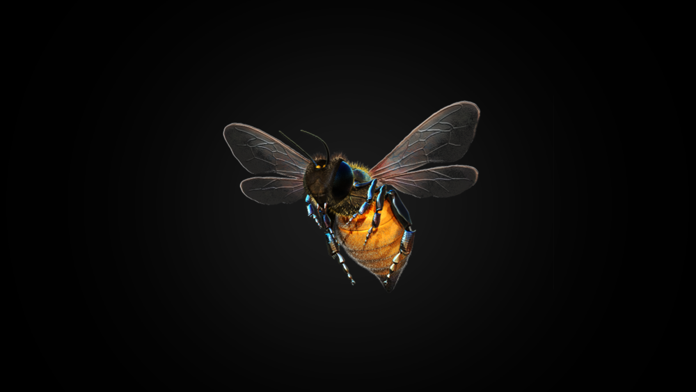 Bee_Beauty.png