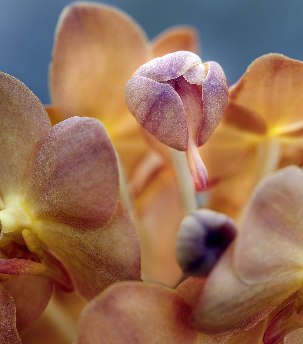 Sensual Botanica #13, 2006