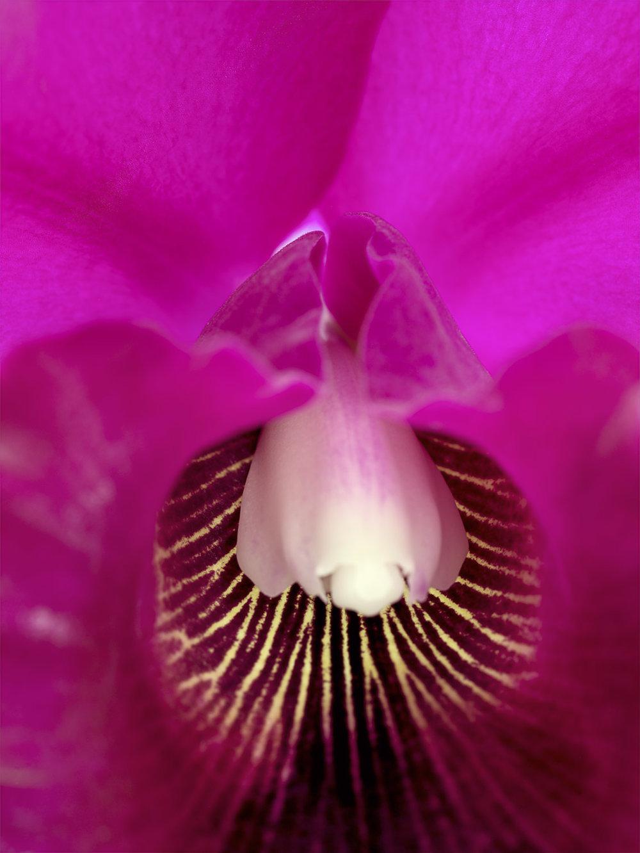 Sensual Botanica #15, 2006