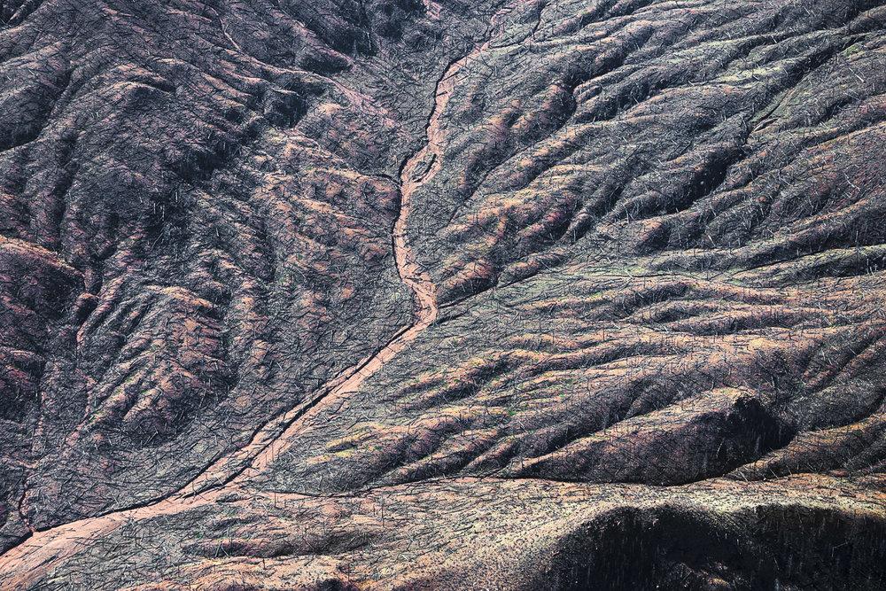 Burnt Sticks, Deckers, CO, 2014