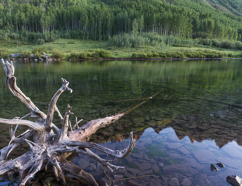 Submerged Trunks, Maroon Bells, CO, 2012